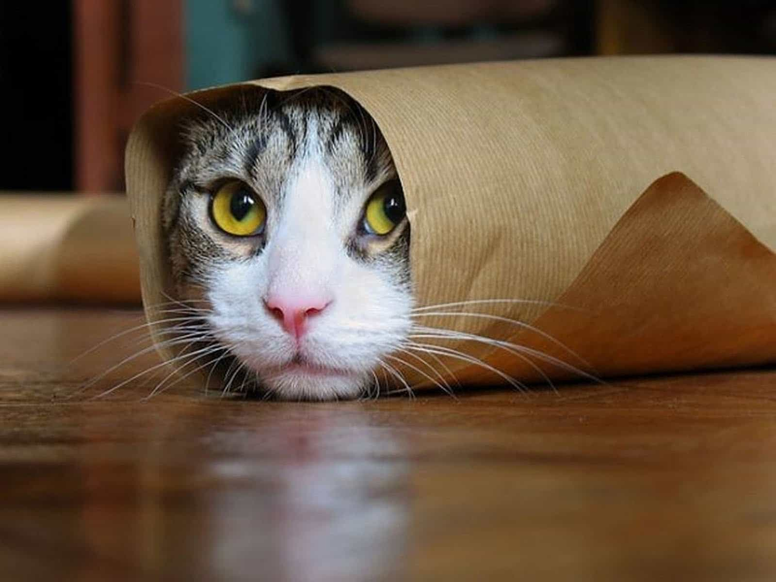 [Image: hiding-cat.jpg]