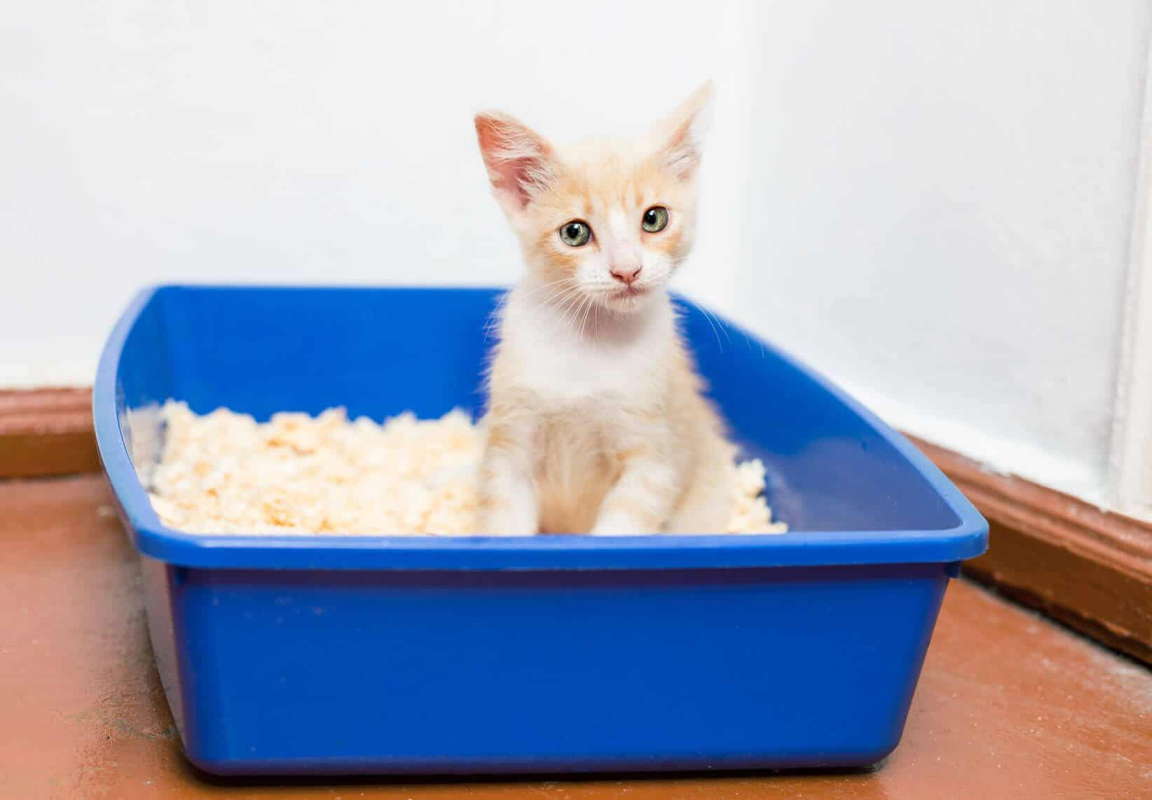 What To Use For Cat Litter