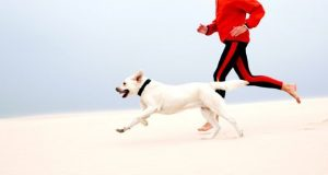 Dog running on beach with owner