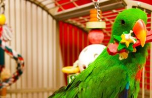 Electus Parrot Playing