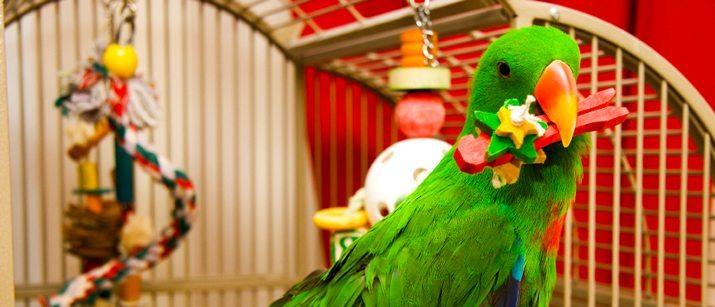 Bird Equipment - Everything Your Bird Needs   VetBabble