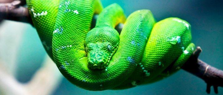 Snake Care Caring For Pet Snakes Vetbabble
