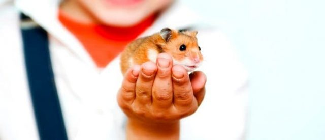 hamster and kid