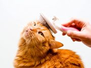 cat grooming picture