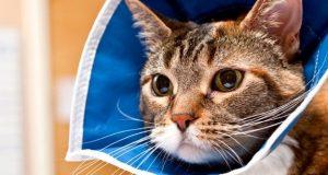 cat in a cone