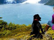 dog next to lake