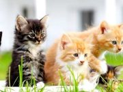 Kittens on grass