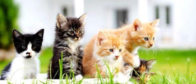 Kittens on grass