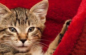 purring cat