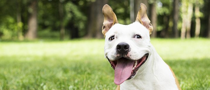 Happy dog in park