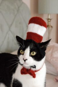 cat in the hat