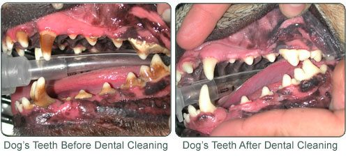 Where To Get Your Cat S Teeth Cleaned