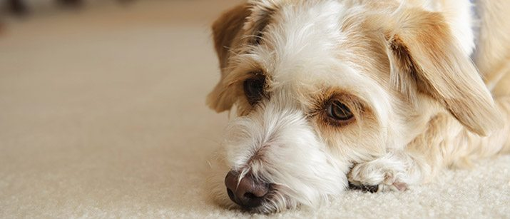 Diarrhea Dogs Food Change