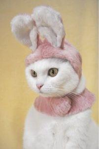 cat in bunny ears