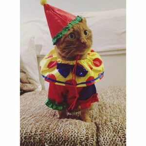 cat in clown costume