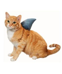 cat with shark fin
