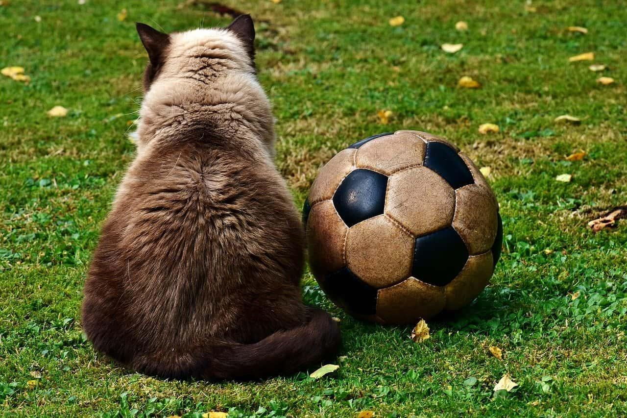 Wellness Cat Food Weight Loss