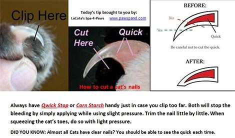 cats_how-to-trim-the-nails
