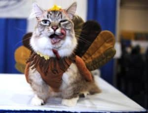 cat in turkey costume