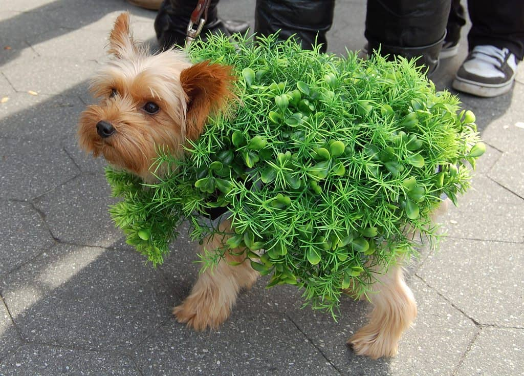 8 Easy (and Adorable) Halloween Costumes for Dogs | VetBabble