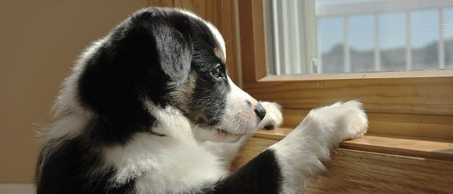 puppy by the window