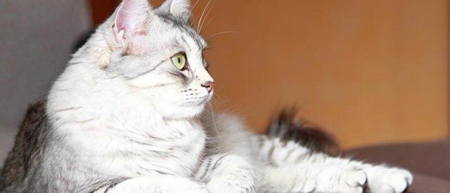 sss cat video