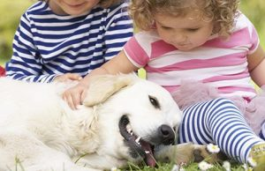 dog with kids