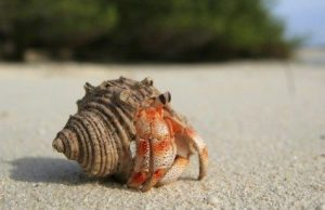 Hermit Crab on Beach