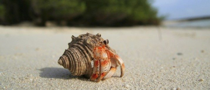 Hermit Crab Care: Pet Guide and Advice | VetBabble