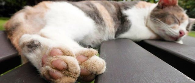cat paws up close