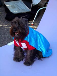 dog in cape