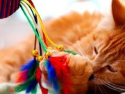 cat playing with feathers