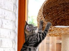 Cat scratching cat tree