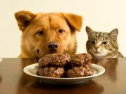 10 Foods That Are Bad for Your Dog