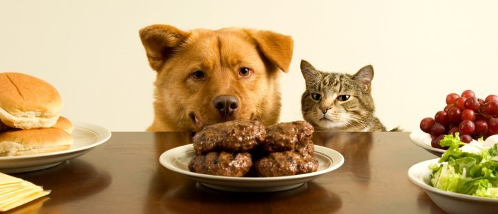 10 Foods That Are Bad For Your Dog Vetbabble