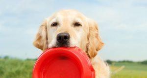 Dog holding a bowl