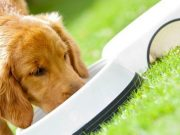 Dog drinking water from a bowl