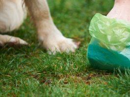 Owner picking up dog poop