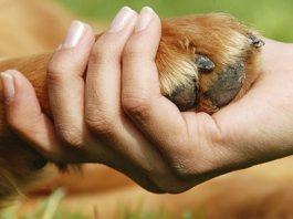 Dog paw and hand