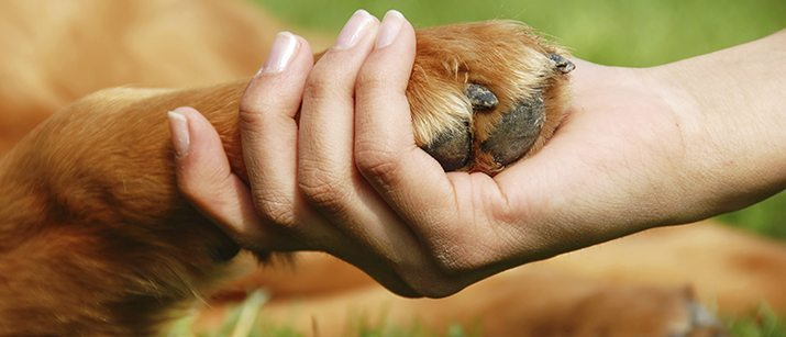 Teaching Your Dog To Shake Paw