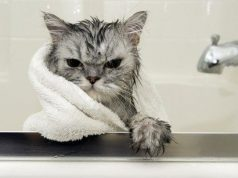 Cat in a bath