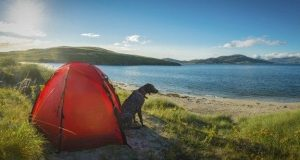 Dog sitting in front of a tent
