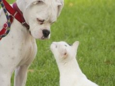 Dog and cat sniffing each other