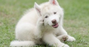 Puppy scratching
