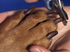 Trimming dog's nails