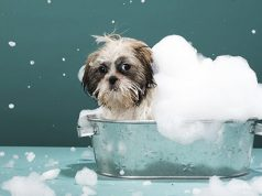 Dog covered in soap foam