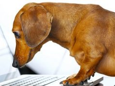 Dog on the laptop