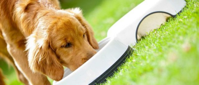 Dog drinking from a bowl