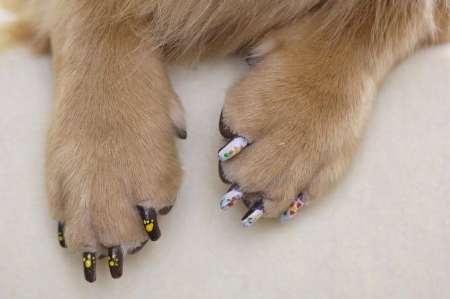 painted dog nails