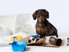 garbage-dog